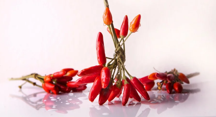 Effect of boundary plantation on the yield and yield contributing attributes of chilli