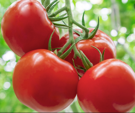 Residue detection of chlorpyrifos and fenitrothion in tomato