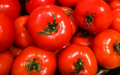 Combined effect of GA3 and NAA on growth and yield of tomato